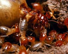 Professional termite treatment costs