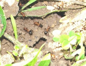 Killing ants and termites on flowers