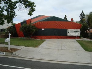 Safety issues of termite tenting