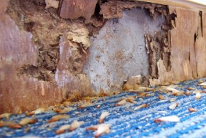 Living spaces for termites