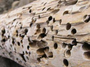 Preventing and controlling termites