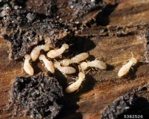 Effective ways on protecting your home against termites