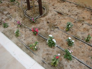 Proper drip irrigation systems