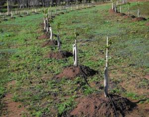 Garden drip irrigation setup