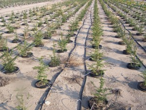 About drip irrigation systems