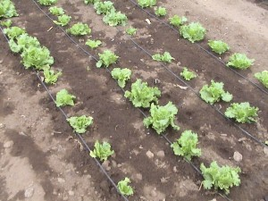 Tips on drip irrigation systems