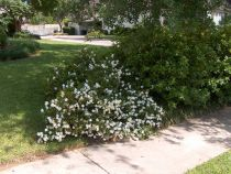 Gartner med busker for skyggefulle områder