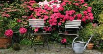 Choosing a Shade Shrub For Your Garden