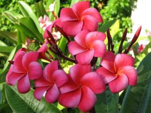 Symbolske betydninger av blomster navn