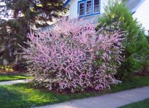 Choosing Flowering Bushes For Shade
