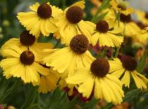 Choosing Fall Flowering Plants