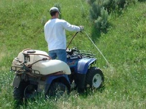 Herbicides protect your lawn