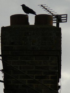 Removing a bird from a chimney pipe