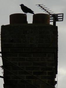 Extracción de un pájaro de un ducto de la chimenea