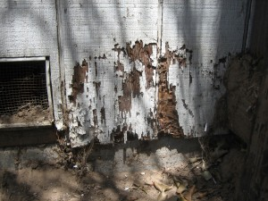 Buying a house – termite damage