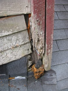 Termite damage signs