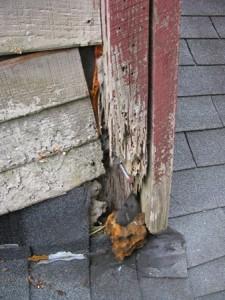 Signes dégâts de termites