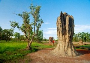Destroying termite mounds