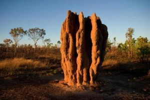 Identifying termite mounds