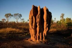 La identificación de los montículos de termitas