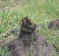 Control de las termitas - métodos orgánicos