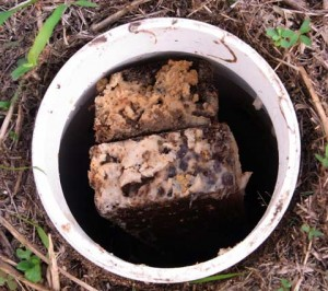 Met behulp van termieten gif in uw huis