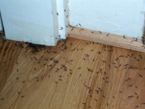 Getting rid of indoor termites