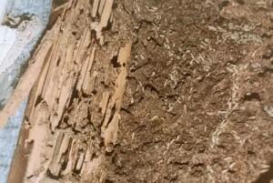 Detener los daños de termitas