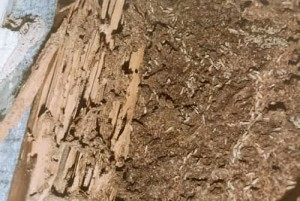 Stoppen termite schaden