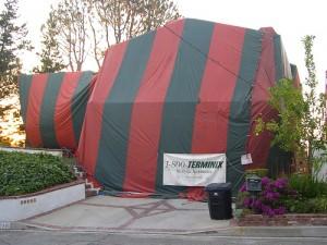 Sobre la seguridad de los tratamientos de termitas