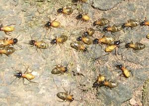 3 façons pour se débarrasser des termites