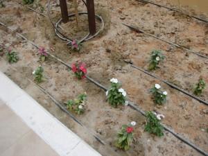Sistemas adecuados de riego por goteo