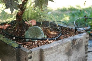 Patio drip irrigation system