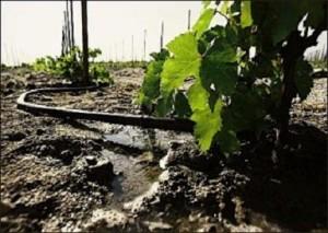 Garden irrigation system setup