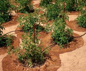 Gotejamento de instalação do sistema de irrigação