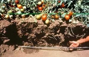 Underjordisk hage vanning