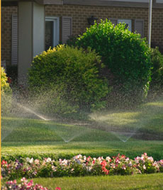 Automatic shrub watering system