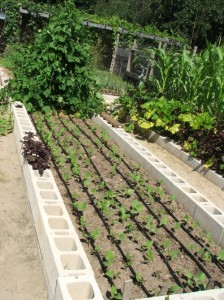 Vegetable garden irrigation system