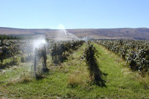 Kleine wijngaard irrigatie
