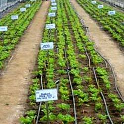 Drip irrigation system installation process