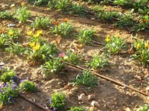 Proper landscape irrigation system