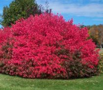 Pruning Your Burning Bushes
