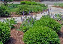Identifying Evergreen And Flowering Shrubs