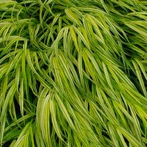 Caring For Ornamental Grass