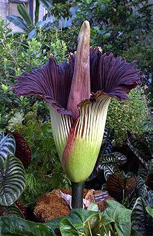 Rare flower types