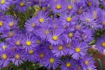 Plants That Bear Purple Flowers