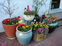 About Container Flower Gardening