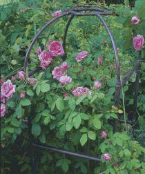 About garden trellis