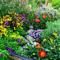 Tips For Flower Gardening